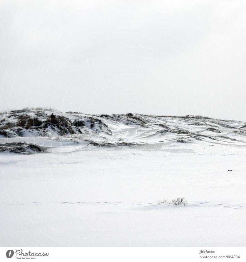 Peace / Weiß... Urelemente Himmel Winter Klima Klimawandel Wetter Schönes Wetter Eis Frost Schnee Gras Nordsee Ostsee entdecken frei frisch Gesundheit kalt