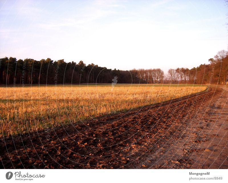 Feldweg Baum Wald Wege & Pfade
