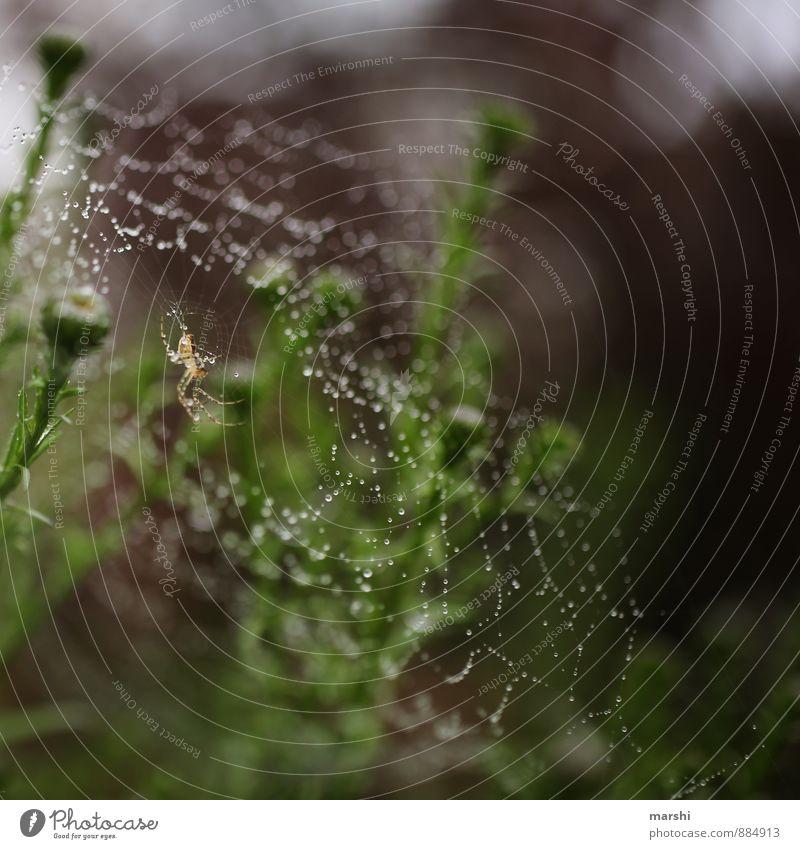 schön gesponnen Natur Pflanze Tier Nutztier Spinne 1 Stimmung Spinnennetz Tau herbstlich Herbstbeginn Kreuzspinne Garten Farbfoto Außenaufnahme Nahaufnahme