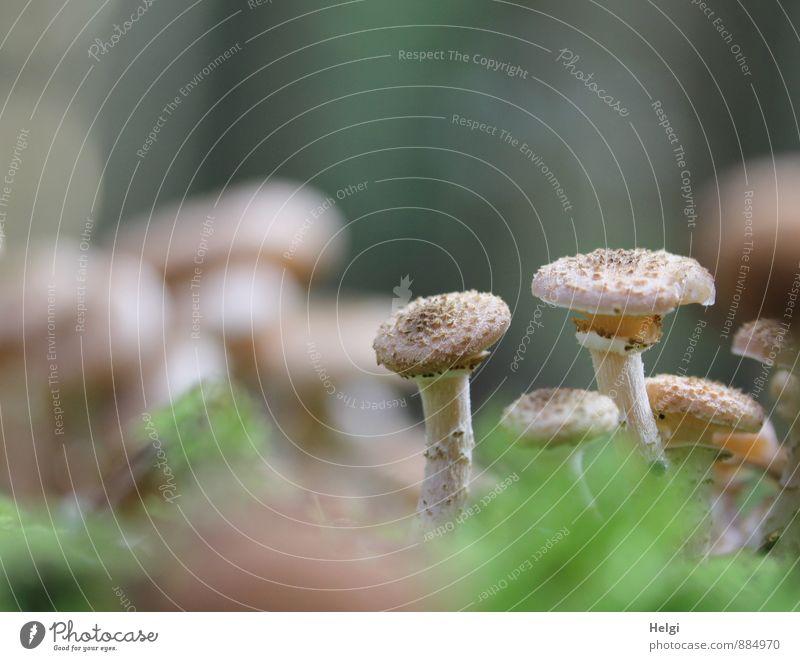 ein paar unter vielen... Natur Pflanze grün ruhig Wald Umwelt Leben Herbst natürlich klein grau braun Wachstum Ordnung authentisch stehen