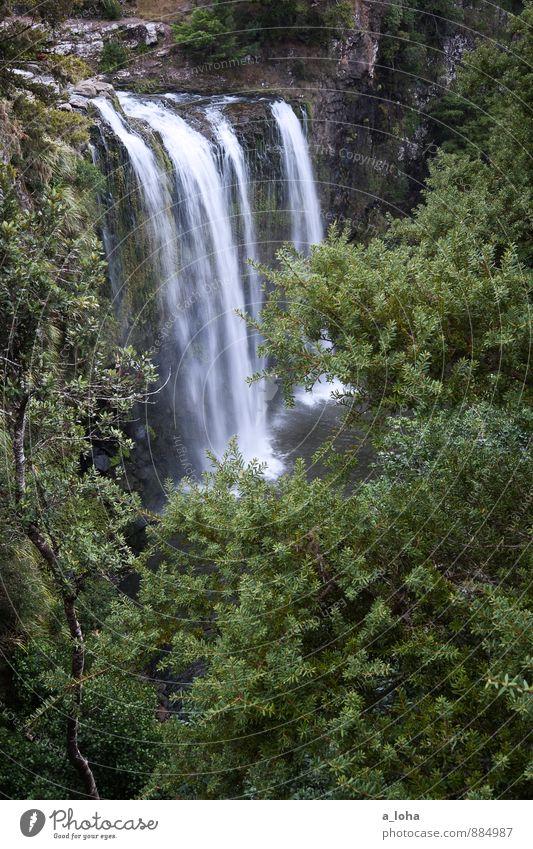water falls Umwelt Natur Pflanze Urelemente Wasser Wassertropfen Sommer Baum Sträucher Grünpflanze Wildpflanze Urwald Felsen Schlucht Wasserfall nass natürlich