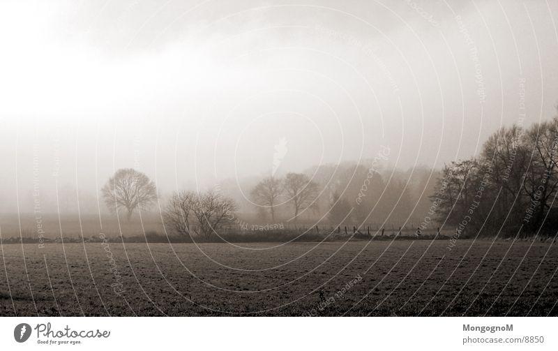 Feld#2 Nebel Baum Wiese Zaun