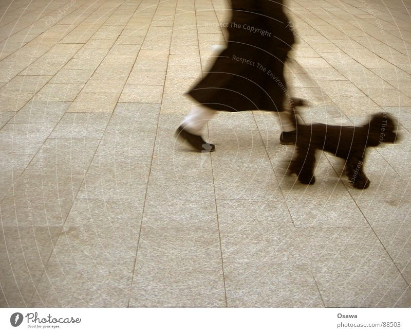 Jetzt erstmal mit dem Hund raus... Hund Mann Stadt schwarz Straße grau Wege & Pfade Stein Beine gehen laufen Beton Platz Spaziergang Mantel Säugetier