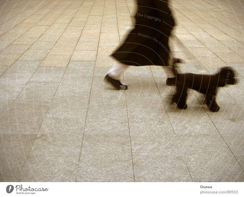 Jetzt erstmal mit dem Hund raus... Pudel Homosexualität gehen Mann schwarz Mantel Beton Platz grau Säugetier Spaziergang Gassi gay Beine laufen Stein Straße