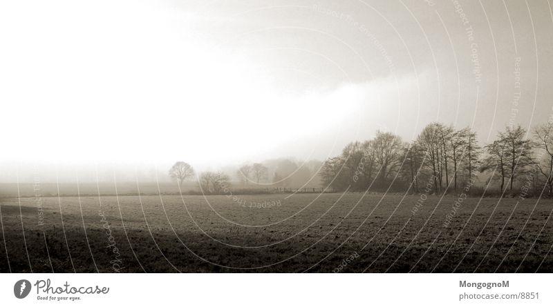 Feld Baum Wiese Nebel Zaun