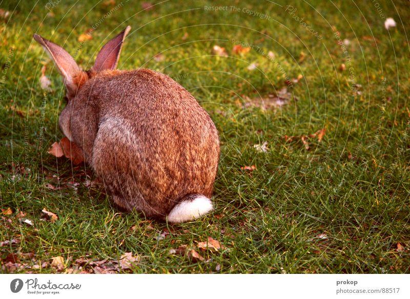 Ostern darf mich mal Hase & Kaninchen Sülze Osterei Wiese Quaste Fell Tier Nagetiere springen protestieren Demonstration Fressen lecker Feiertag Ostermontag