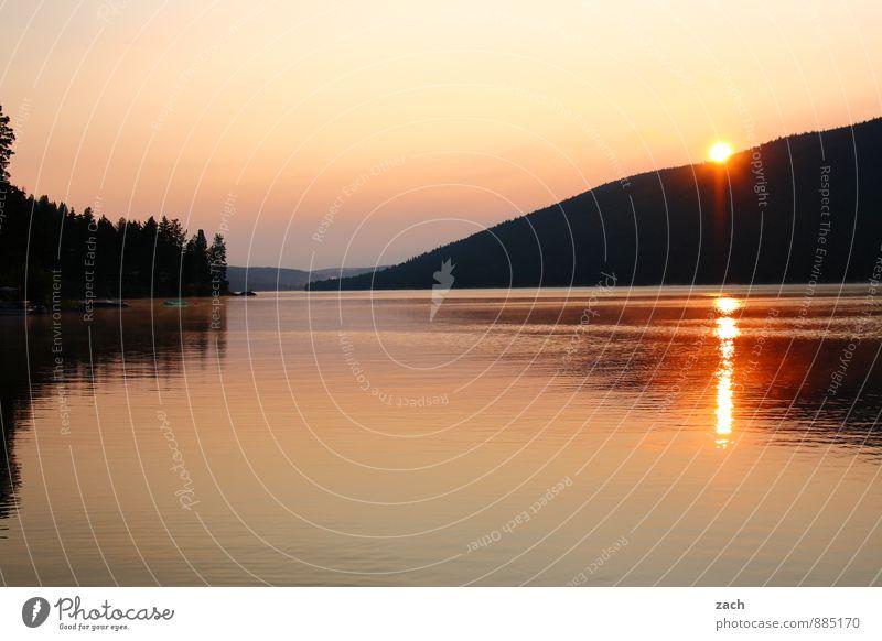 Wohlfühloase | morgens am Loon Lake Wasser Sommer Baum Landschaft Ferne Küste Schwimmen & Baden See Idylle Schönes Wetter Seeufer Hügel Wolkenloser Himmel