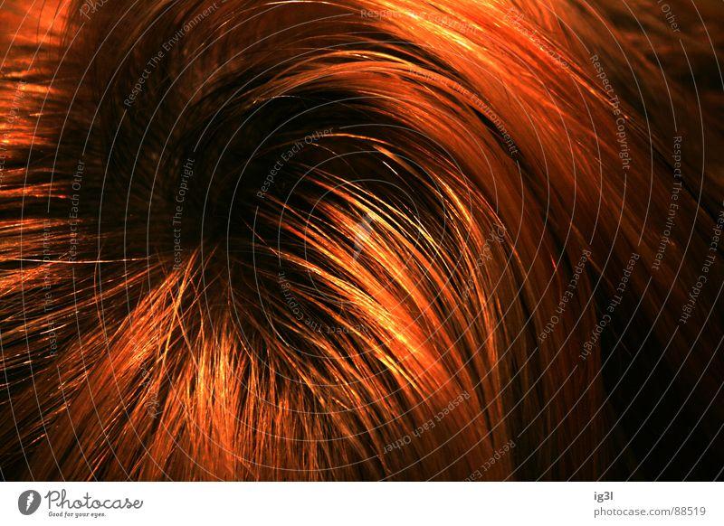 der HAARte kern #1 Haarsträhne dünn schmal lang Muster Kopfbedeckung Fell Physik schön Haarwaschmittel Sauberkeit Reinigen groß Lichtpunkt glänzend rot gelb
