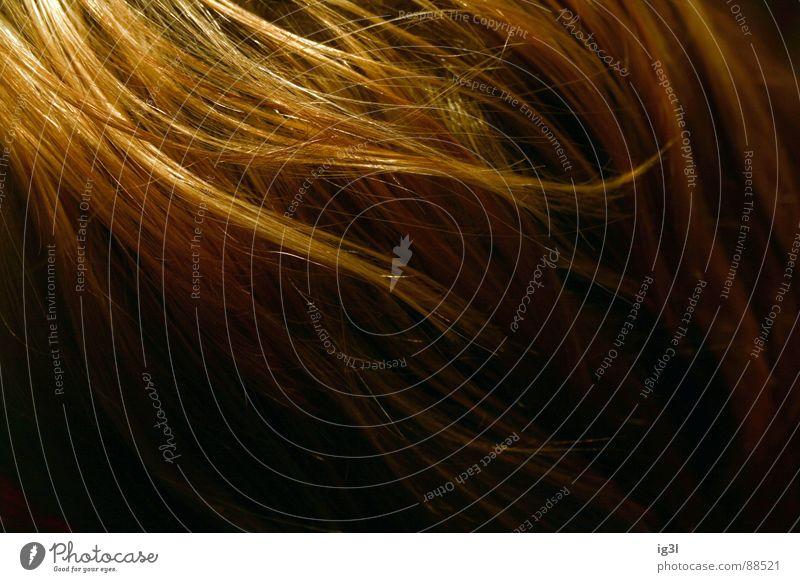 der HAARte kern #3 Haarsträhne dünn schmal lang Muster Kopfbedeckung Fell Physik schön Haarwaschmittel Sauberkeit Reinigen groß Lichtpunkt glänzend rot gelb