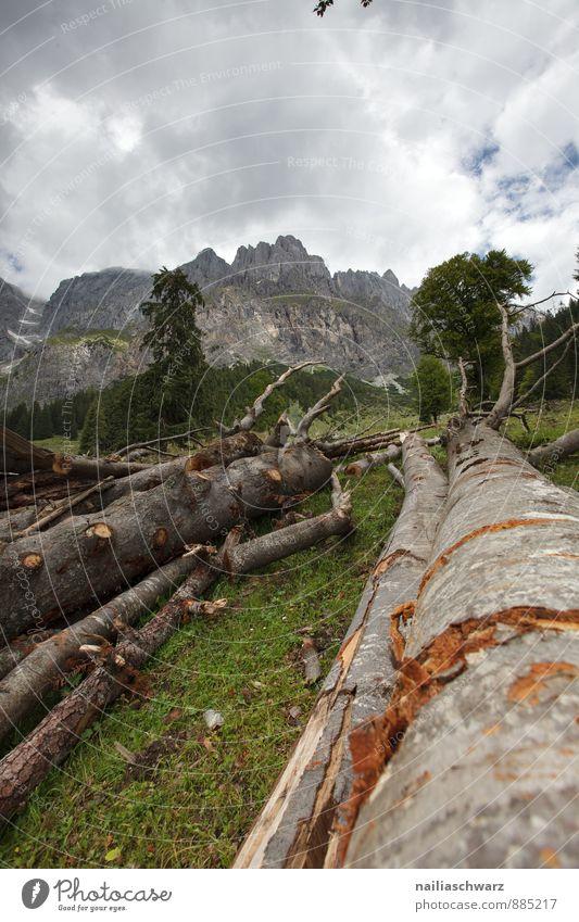 gefällter Baum, Alpen Himmel Natur grün schön Sommer Landschaft dunkel kalt Berge u. Gebirge Umwelt Gras natürlich braun Kraft groß