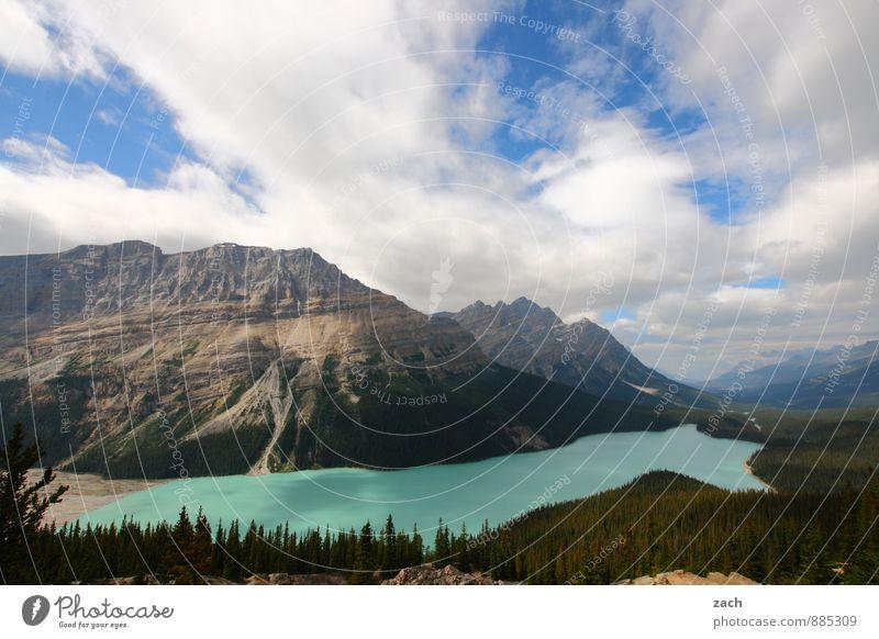 Ausblick auf Peyto Lake Himmel Natur Ferien & Urlaub & Reisen blau Pflanze grün Wasser Sommer Baum Landschaft Wolken Ferne Wald Berge u. Gebirge See Felsen