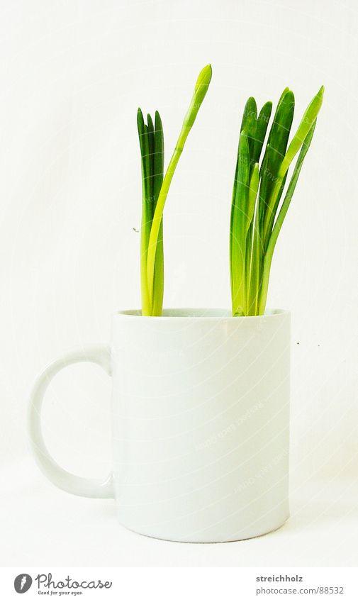 Frühling in der Kaffeetasse Tulpe grün frisch Hoffnung Tasse Wachstum Reifezeit Optimismus sprießen gewachsen Hobelbank Agentur verrückt skurril Gras Design