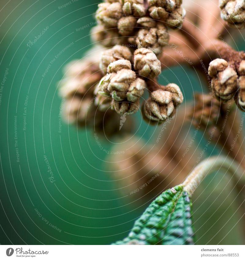 grünr* braun Pflanze Wachstum Natur flakes Makroaufnahme Trieb