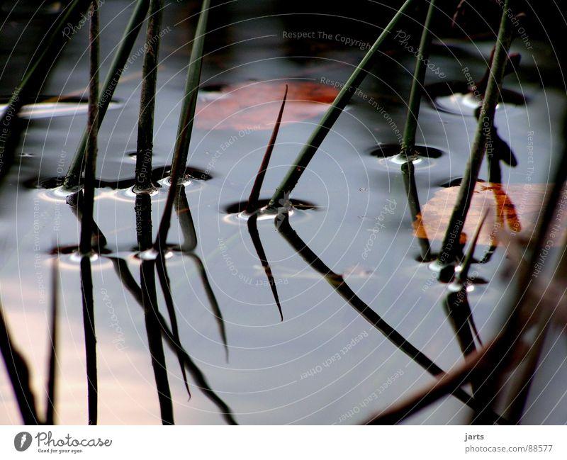 Stille Wasser Wasser ruhig Einsamkeit Erholung träumen See Denken Vergänglichkeit Schilfrohr