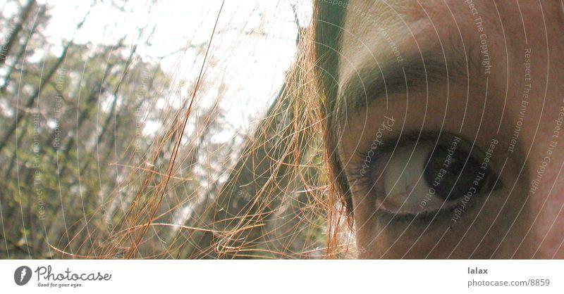 verlaufen im wald Frau Mensch Gesicht Auge Wald Angst