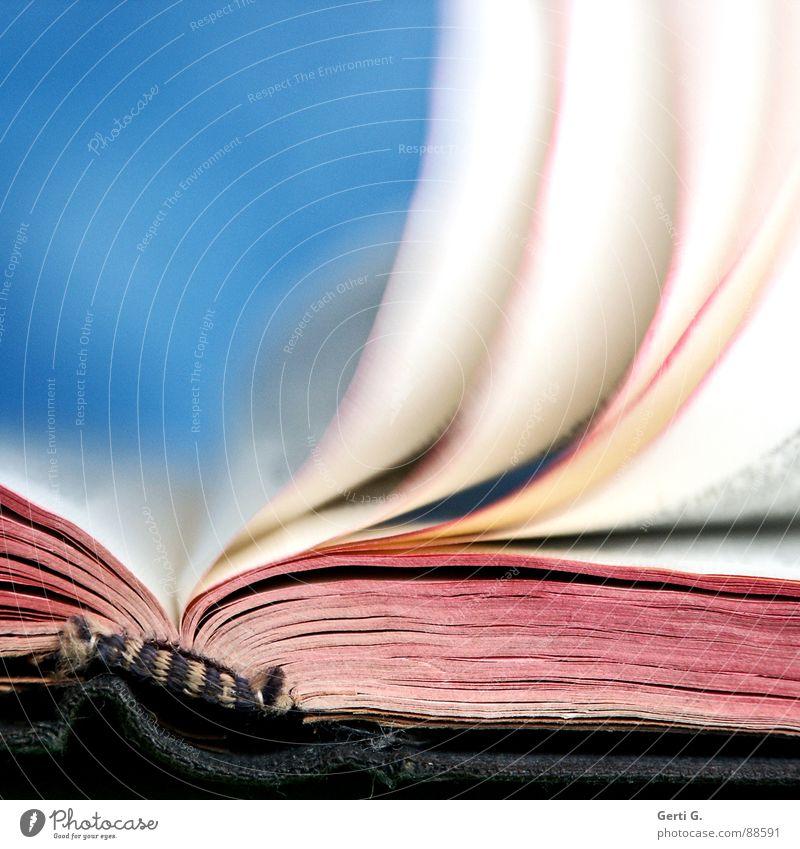 strongly blown blau weiß rot hell rosa offen Schriftzeichen Wind Buch geschlossen lesen Buchstaben Bildung Medien Typographie blasen