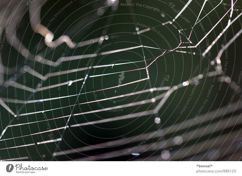 vernetzt Natur ruhig Herbst außergewöhnlich Kraft Design Erfolg warten Wassertropfen bedrohlich kaputt rund Schnur dünn Netz Zusammenhalt
