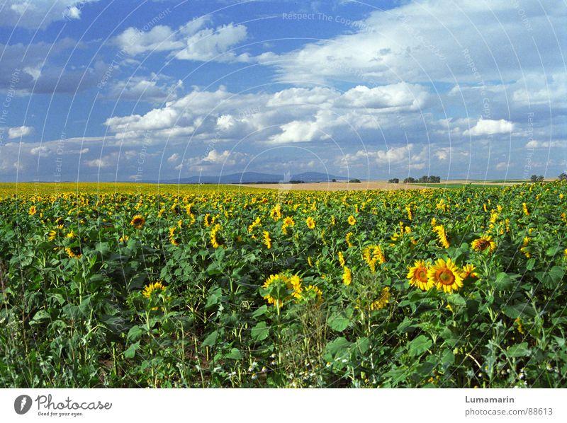 friendly view Freude Sommer Landschaft Himmel Wolken Horizont Feld Freundlichkeit blau gelb Sonnenblume Farbfoto Außenaufnahme Menschenleer Tag