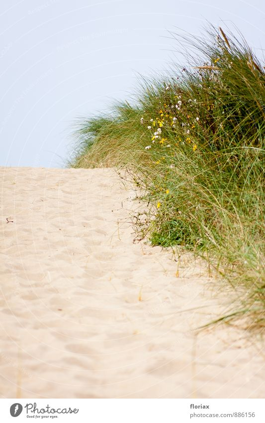 hinüber zum meer I/III Natur Ferien & Urlaub & Reisen Pflanze Sommer Meer Einsamkeit Landschaft Strand Ferne Umwelt Wege & Pfade Glück Freiheit Tourismus