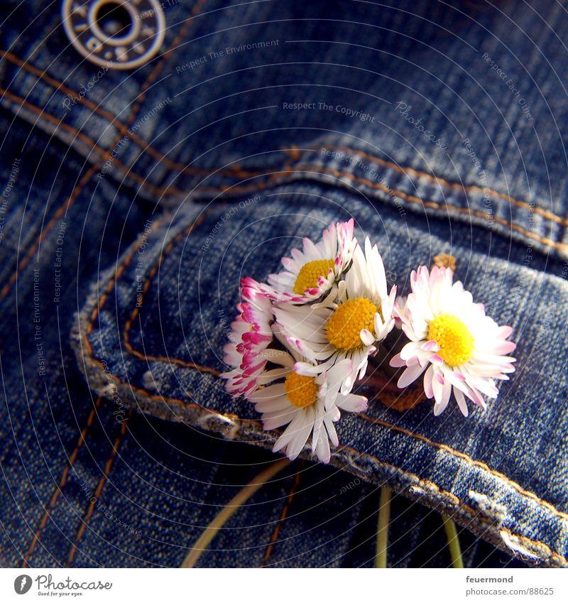 Knopfloch-Schmuck Gänseblümchen Jacke Blume Frühling Jeansjacke Knöpfe verschönern Blüte springen Sommer Bekleidung Jeanshose Schönes Wetter summery sun jacket