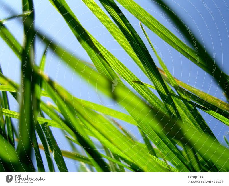 morgendlicher blick aus meiner höhle Natur schön grün blau Sommer Wiese Gras Frühling Park Wärme Feld Wind Wetter Baustelle Sauberkeit Physik
