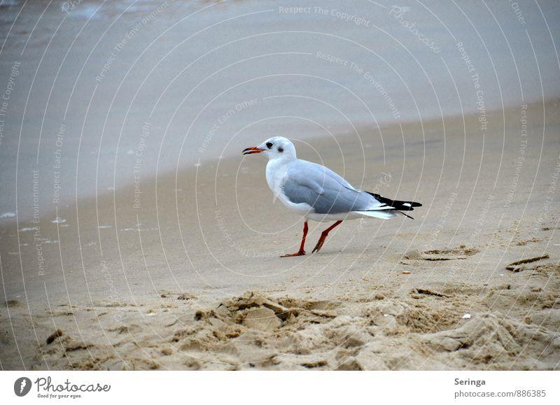 Strandmöwe schön Tier Freiheit fliegen Vogel