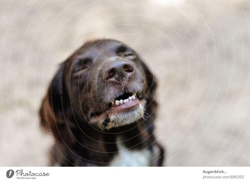 der kleine Genießer... Hund Tier Freude Bewegung natürlich Spielen lachen Glück Zufriedenheit wandern sitzen Fröhlichkeit laufen einzigartig Freundlichkeit