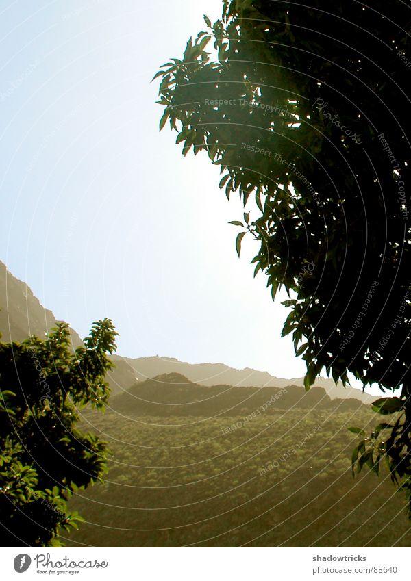 Kanarische Szenerie Natur Himmel Baum Pflanze Ferien & Urlaub & Reisen Ferne Berge u. Gebirge Wärme Landschaft Afrika Klima Physik heiß Urwald Loch Kanaren