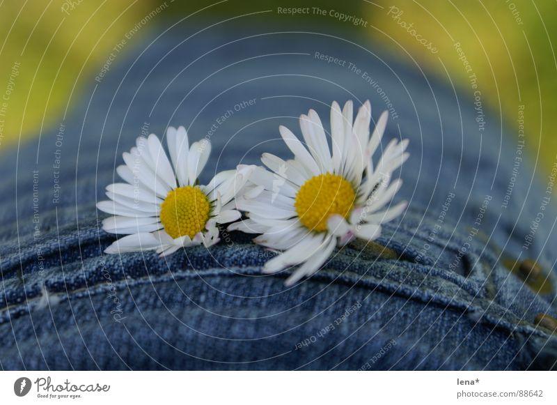 Blüüümchen Blume Sommer Frühling Jahreszeiten weiß gelb grün Blüte Tasche Pflanze Gänseblümchen Minirock Pollen Naht jeansblau Schönes Wetter Physik 2