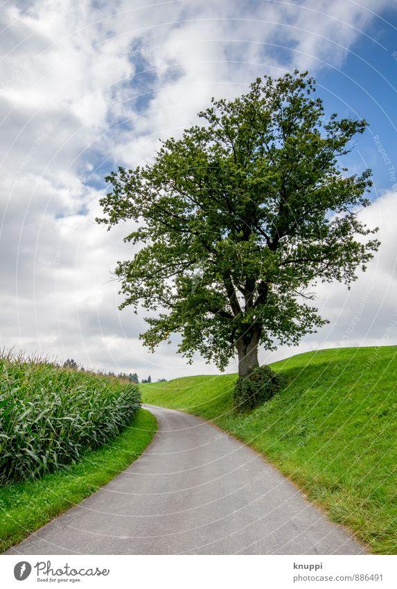 randständig Umwelt Natur Landschaft Himmel Wolken Sonnenlicht Sommer Klimawandel Schönes Wetter Regen Pflanze Baum Gras Blatt Nutzpflanze Wildpflanze Feld Hügel