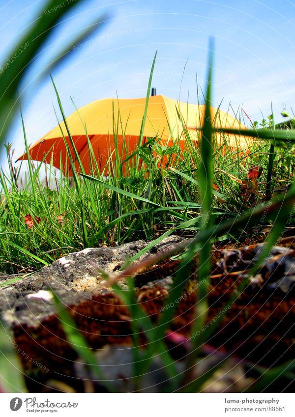 The Beginning Cloppenburg Regenschirm Sonnenschirm Unwetter Wolken Gras Halm Wiese Sommer Feld grün Frühling Blumenwiese Umwelt sommerlich Pflanze