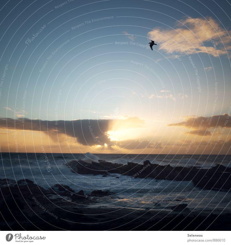 letztes Licht Ferien & Urlaub & Reisen Tourismus Ausflug Abenteuer Freiheit Sommer Sommerurlaub Sonnenbad Strand Meer Wellen Umwelt Natur Wasser Himmel Wolken