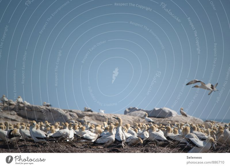 dieser Ammoniakduft in der Luft... Ferien & Urlaub & Reisen Tourismus Ausflug Ferne Freiheit Umwelt Natur Himmel Wolkenloser Himmel Horizont Küste Meer Tier