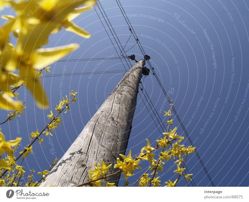 Osterstrom Himmel blau gelb Frühling Elektrizität Industrie Strommast aufwärts