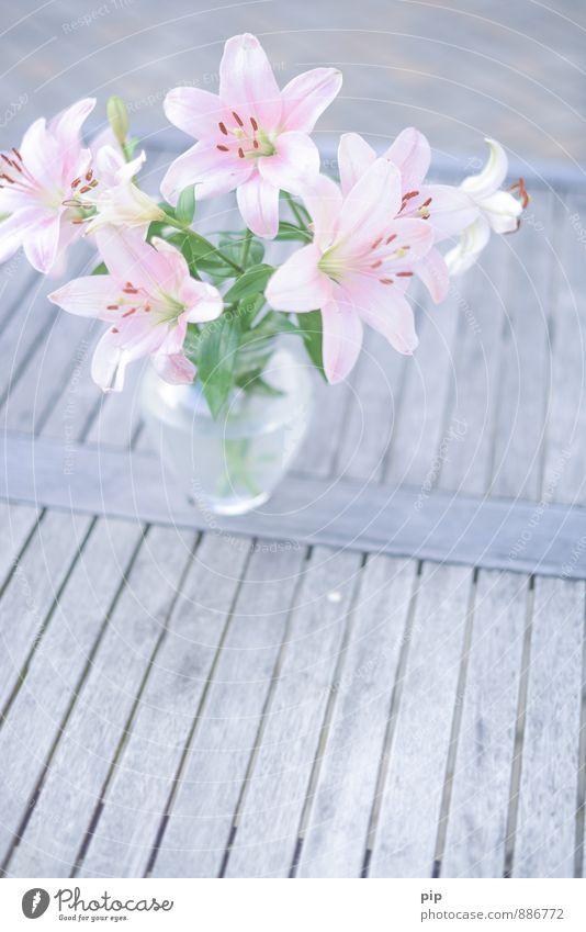 lilium schön grün Blume grau rosa Häusliches Leben Idylle Dekoration & Verzierung ästhetisch Tisch Geschenk Romantik zart Blumenstrauß Duft bleich