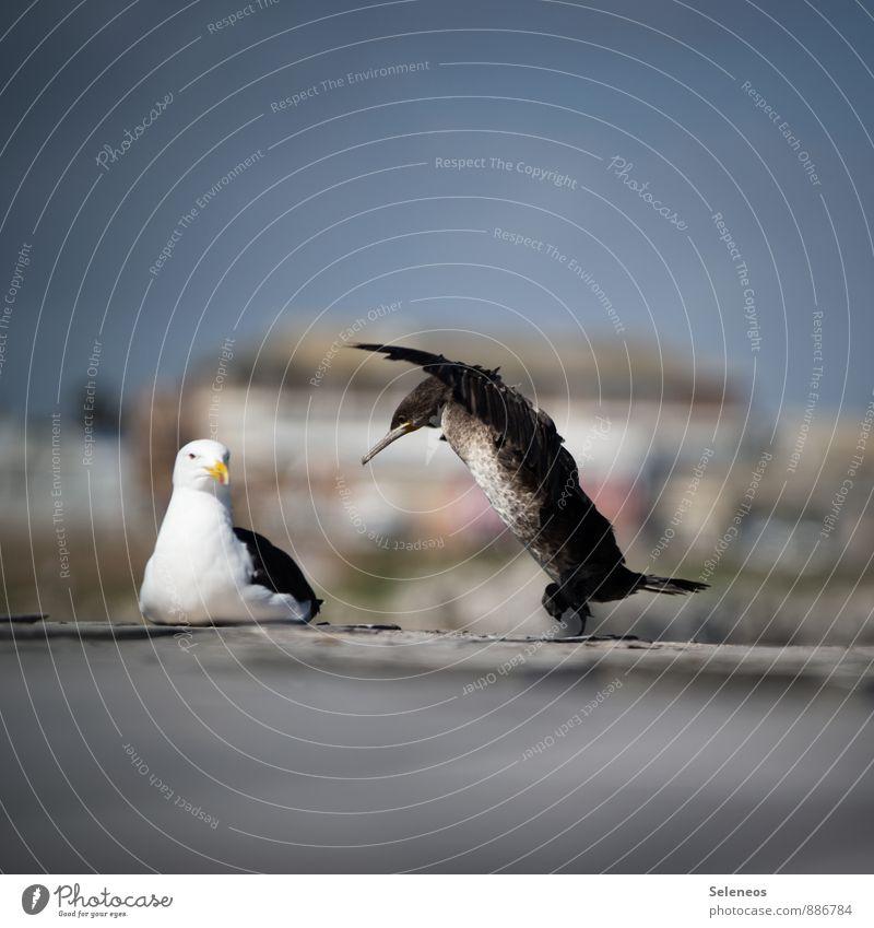 Attacke! Natur Ferien & Urlaub & Reisen Erholung Tier Umwelt Bewegung Vogel Wildtier Zufriedenheit Tourismus Tanzen Abenteuer Hafen Wolkenloser Himmel Möwe