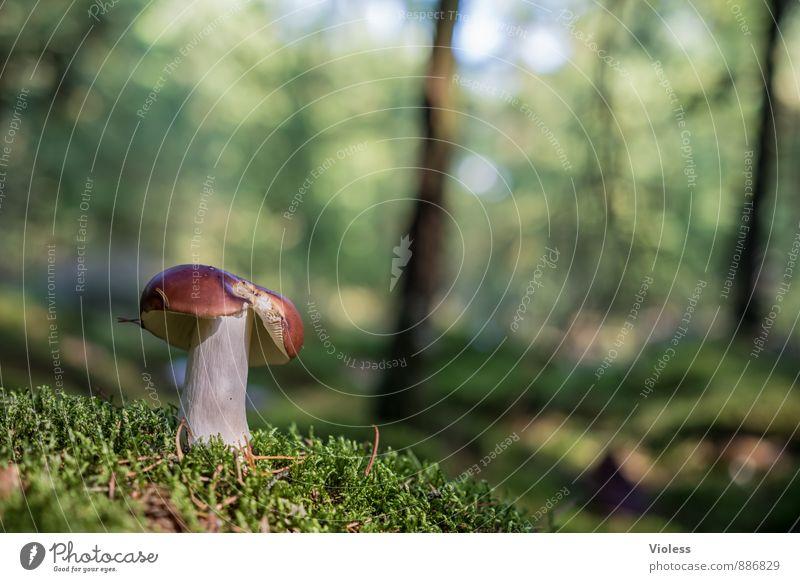 Waldleben ... Natur Pflanze grün Landschaft Wald Moos Pilz Waldboden Pilzhut