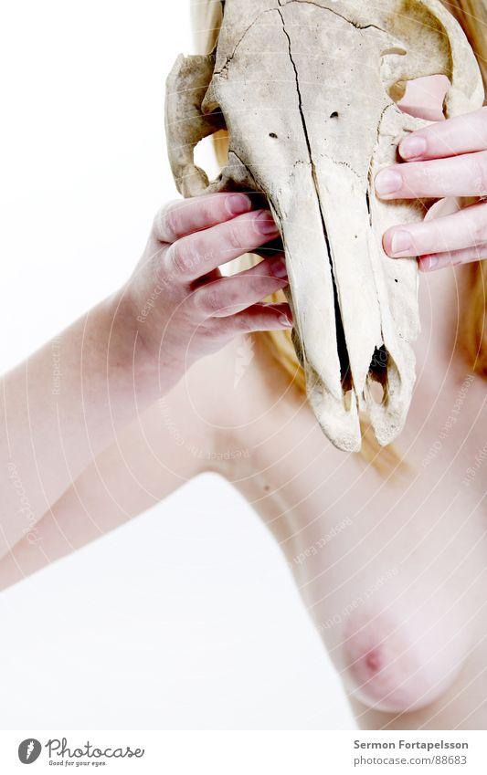 D. van der Nies 7172 Frau nackt weiß blond rothaarig Tier bleich ausgebleicht hart weich Akt Vergänglichkeit Haut hell Auge Haare & Frisuren Blick Schädel Tod