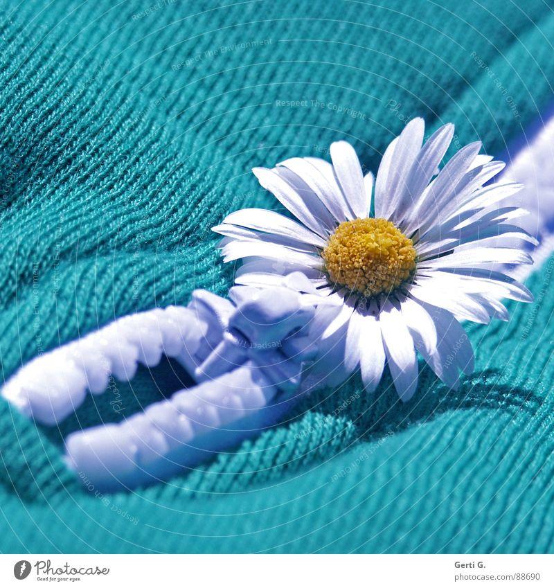 ReiZverschluß weiß Blume grün Freude gelb Blüte Linie Bekleidung verrückt T-Shirt Stoff Schmuck diagonal Gänseblümchen Material verschönern