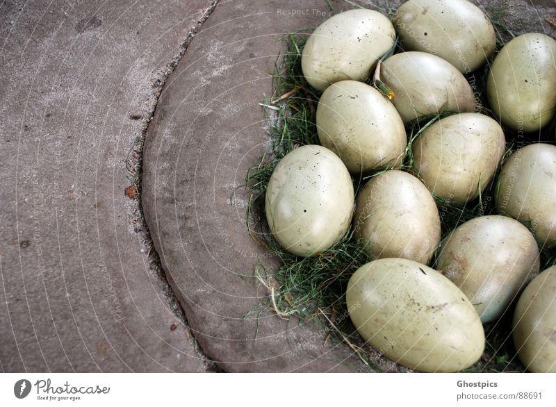 Drachen Eier Vogel Ostern geheimnisvoll Respekt Steinzeit Fabelwesen