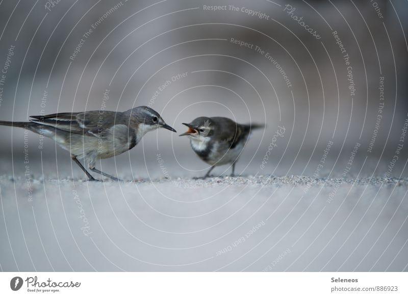 Fütterungszeit Natur Tier Umwelt Tierjunges Frühling Wildtier Taube füttern