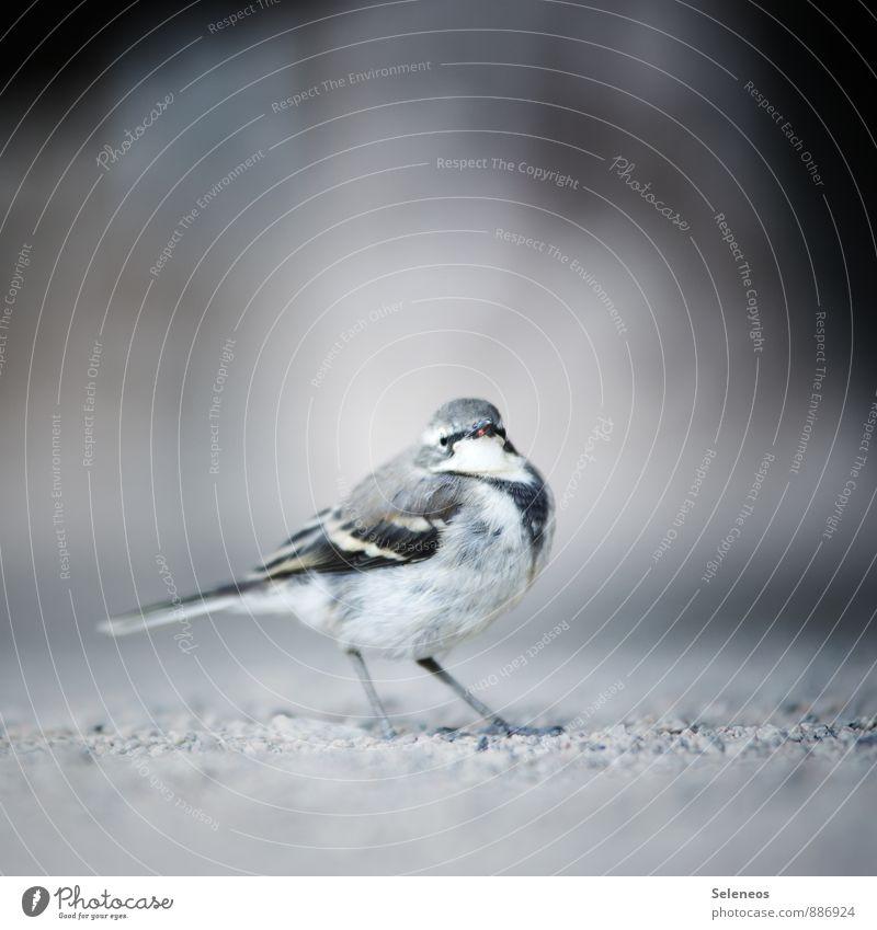 Hunger. Natur Tier Umwelt klein Garten Vogel Park Wildtier Flügel nah Appetit & Hunger Tiergesicht dick Diät
