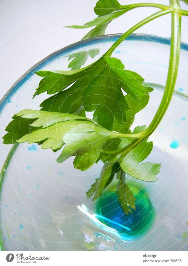 glasblau mit grünzeug durchsichtig leicht Durchblick Einblick Frühling kochen & garen Küche mehrfarbig Material Reflexion & Spiegelung Design frisch Kunst