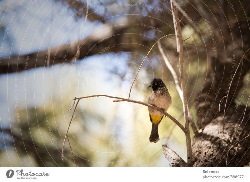 Wer bin ich? Natur Ferien & Urlaub & Reisen Sommer Sonne Baum Tier Umwelt klein Vogel Tourismus Wildtier Ausflug Geäst Ornithologie Zweige u. Äste