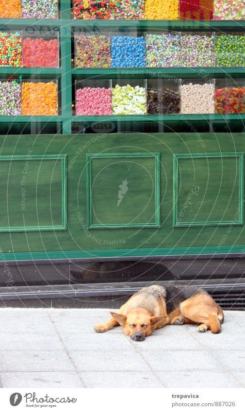 bonbons Hund Stadt Erholung ruhig Freude Tier Straße Essen Idylle authentisch Beton genießen retro Schutz Sicherheit Kitsch