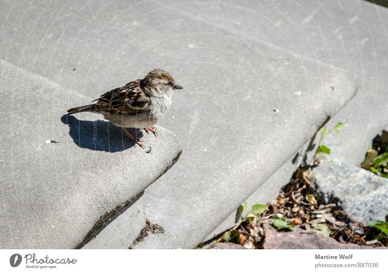 hop down Tier Lijepaja Lettland Europa Treppe Wildtier Vogel Spatz Sperlingsvögel 1 Mut Natur Gedeckte Farben Außenaufnahme Menschenleer Hintergrund neutral Tag