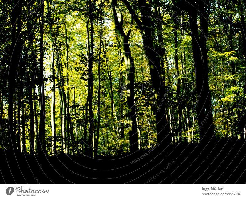 Wald Baum grün eng Landschaft Tree Waldspiel Scharz Farbe Himmel Natur Bewaldung Tarzan
