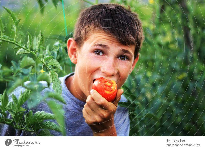 Freudiger Junge beisst in die Tomate Lebensmittel Gemüse Frucht Essen Bioprodukte Vegetarische Ernährung Gesunde Ernährung Landwirtschaft Forstwirtschaft Mensch