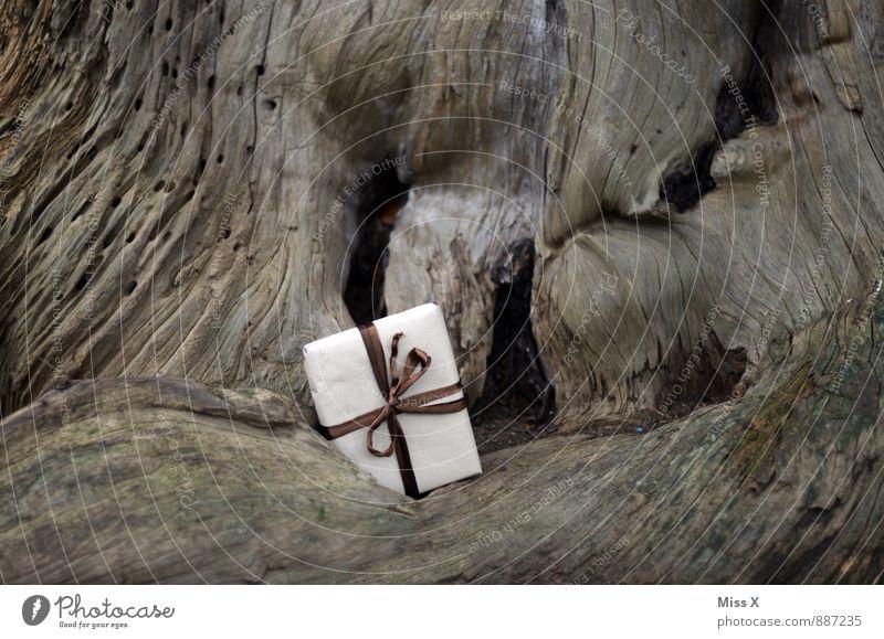 Ablage Geburtstag Baum Verpackung Paket Schleife warten Geschenk Versand schenken vergessen verstecken Holz Wurzelholz Farbfoto Gedeckte Farben Außenaufnahme