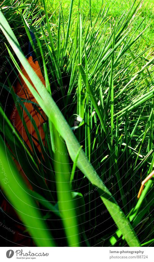 Osterüberraschung Cloppenburg Regenschirm Sonnenschirm Unwetter Wolken Gras Halm Wiese Sommer Feld grün Frühling Osterei Suche Überraschung geheimnisvoll